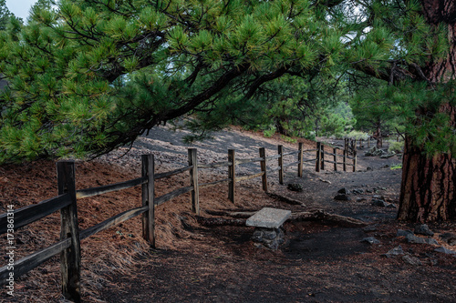 A rock masonry bench offers it's occupant a shady respite under the boughs of a mature ponderosa pine Poster