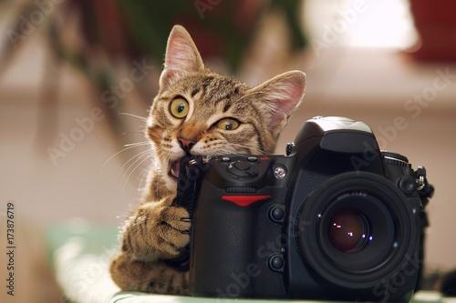 Foto op Aluminium Kat Funny cat with a camera
