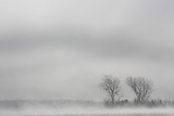 trees coming out of the fog in a field - 173902938