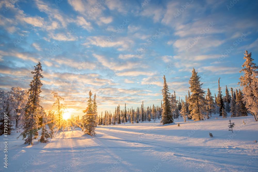 Fototapeta Snowy landscape at sunset, frozen trees in winter in Saariselka, Lapland, Finland