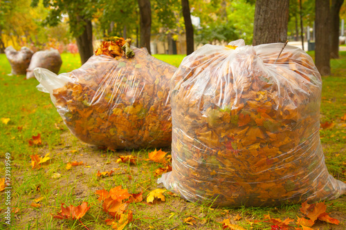 Photo autumn cleaning in the park