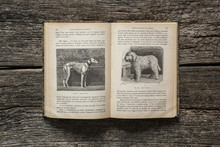 Ancient School Book Of Natural Science (printed In 1906) With Dog Illustrations, On Wooden Table.