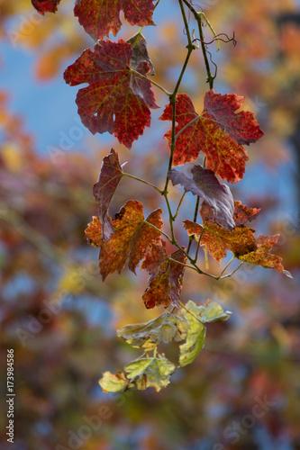 Fotografia  Ramo con foglie colorate