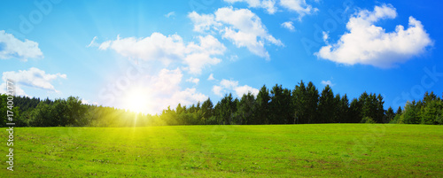 Foto op Plexiglas Weide, Moeras Field with green grass and sun.