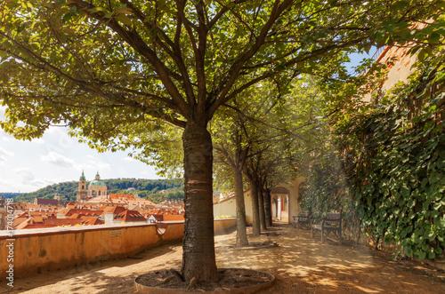 Plakat Promienie słońca przeświecają przez korony drzew. Sylwetka Lesser ćwiartka Praga na tle. Z wieżą zegarową i kopułą katedry św. Mikołaja.