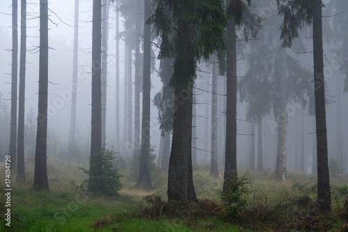 Farben des Herbst Wald