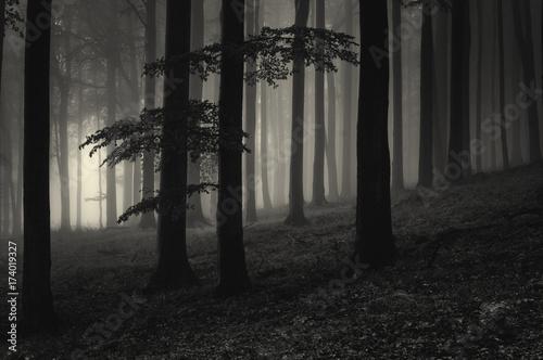 tajemniczy-las