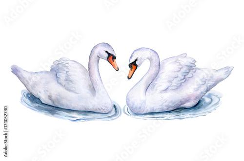 Carta da parati Swans isolated on white background