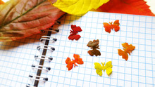 Autumn Butterfly Leaves Color ...