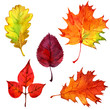Autumn leaves, isolated on white background, watercolor illustration