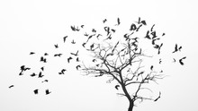 Birds Fly From The Tree Like L...