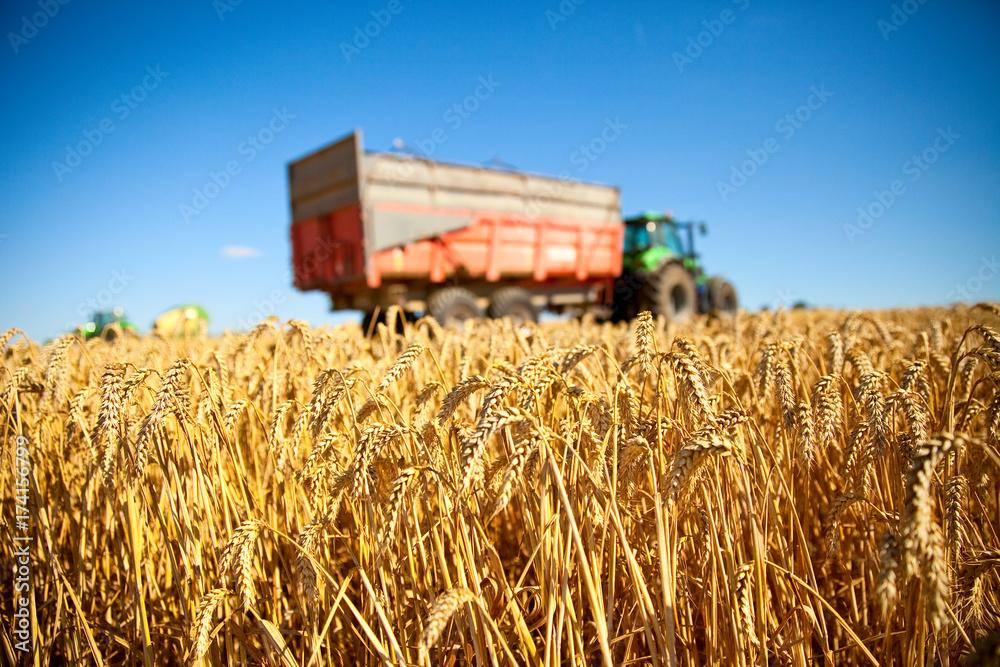 Moisson de blé en France