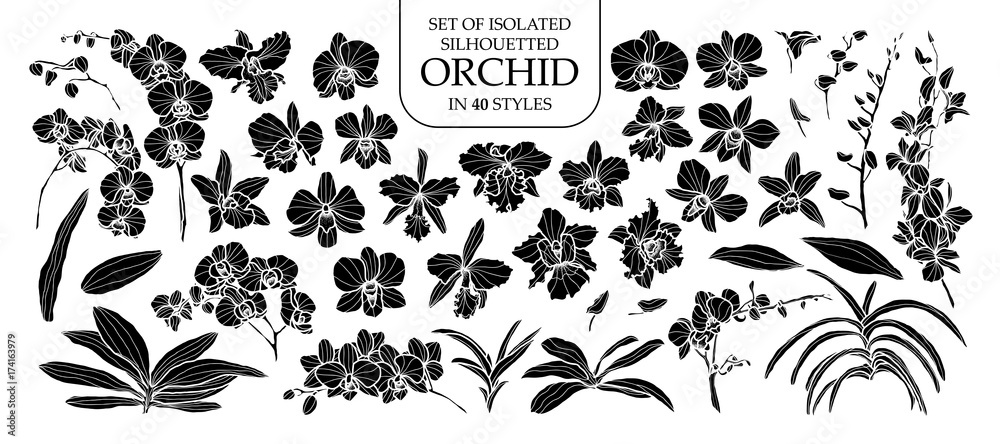 Fototapety, obrazy: Set of isolated silhouette orchid in 40 styles. Cute hand drawn vector illustration in white outline and black plane.