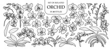 Set Of Isolated Orchid In 40 Styles. Cute Hand Drawn Vector Illustration In Black Outline And White Plane.