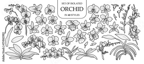 Fotografía Set of isolated orchid in 40 styles