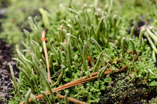 Photo Lichen in forest