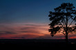 A colorful fairy magical pink-blue sunset by the countryside and a magnificent deciduous tree in the foreground.