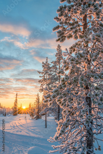 Foto op Plexiglas Blauwe jeans Snowy landscape at sunset, frozen trees in winter in Saariselka, Lapland, Finland