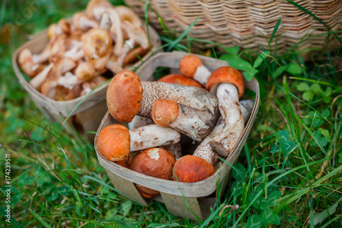 Baskets full of various kinds of mushrooms in a forest Canvas Print