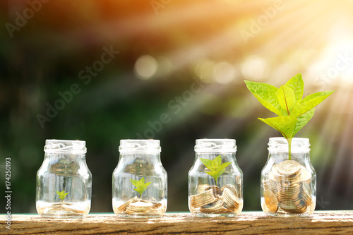 Fototapeta Coin in the bottle and plant growing with savings money put on the wood in the morning sunlight, Business investment and saving growth concept. obraz