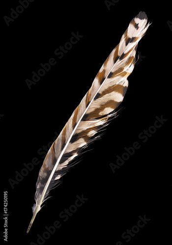 three color forest bird isolated on black feather