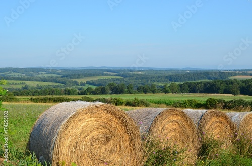 Fototapeta Hay bales in the field on the farms and hills of upstate New York in summer