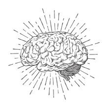 Hand Drawn Human Brain With Sunburst Anatomically Correct Art. Flash Tattoo Or Print Design Vector Illustration