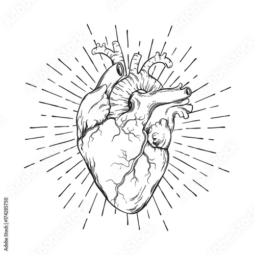Hand drawn human heart with sunburst anatomically correct art. Flash tattoo or print design vector illustration