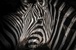 High contrasty zebra portait
