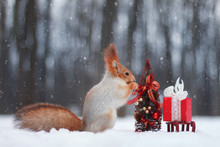 The Red Squirrel Decorates A Christmas Tree