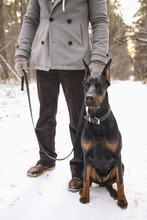 Obedient Doberman Sitting Next To Her Owner In Forest
