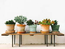 Potted Succulent Plants On A Bench