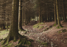 Path Through Forest Near Blea ...