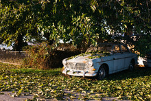 Old Car Abandoned Under Tree W...