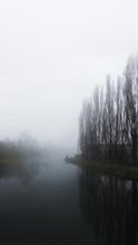 Winter Landscape: Leafless Tre...