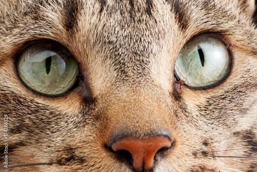 Photo  猫の素材