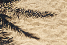 Shadow Of A Palm Leaf On The S...