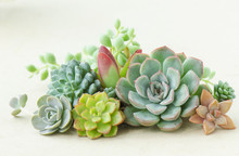 Colorful Flowering Succulent Plants Bouquet