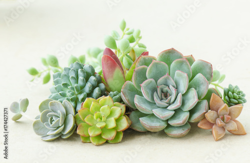 Recess Fitting Plant Colorful flowering succulent plants bouquet