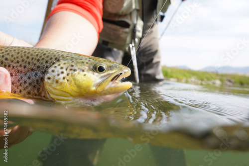 Printed kitchen splashbacks Fishing Closeup of brown trout caught in Montana state river