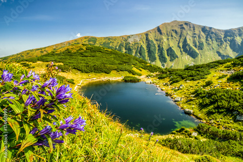 fiolkowe-kwiaty-w-zachodnich-tatrach-sistani