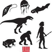 Human Evolution. Animal Evolut...