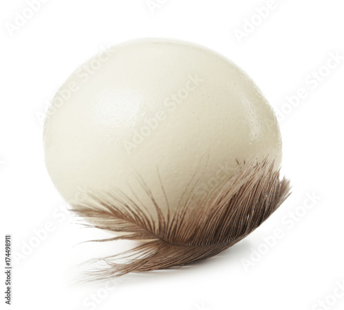 Stickers pour porte Autruche Ostrich egg and feather on white background