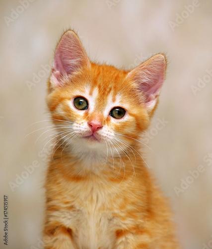 Keuken foto achterwand Kat ginger kitten portrait
