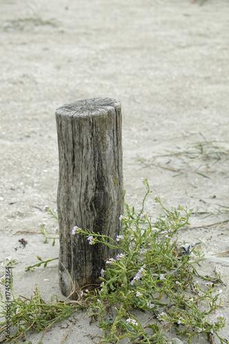 Fotografia, Obraz  poteau sur le sable