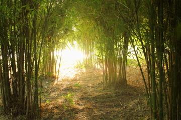 Bamboo garden with sunlight