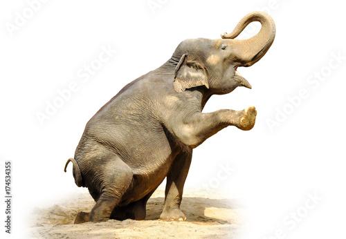 Foto op Aluminium Olifant Elephant isolated on white background