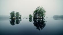 Foggy Midsummer