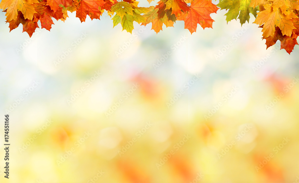 Fototapety, obrazy: Falling autumn maple leaves natural background .Colorful foliage