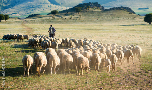 Obraz na płótnie Shepherd and herd of sheep